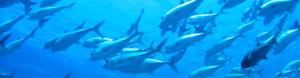 海の世界:回遊魚